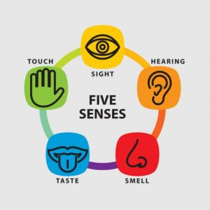 five-senses-icon-set_62147502195